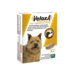 Veloxa chien - x2 comprimés